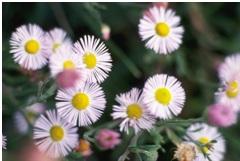 flowers laura